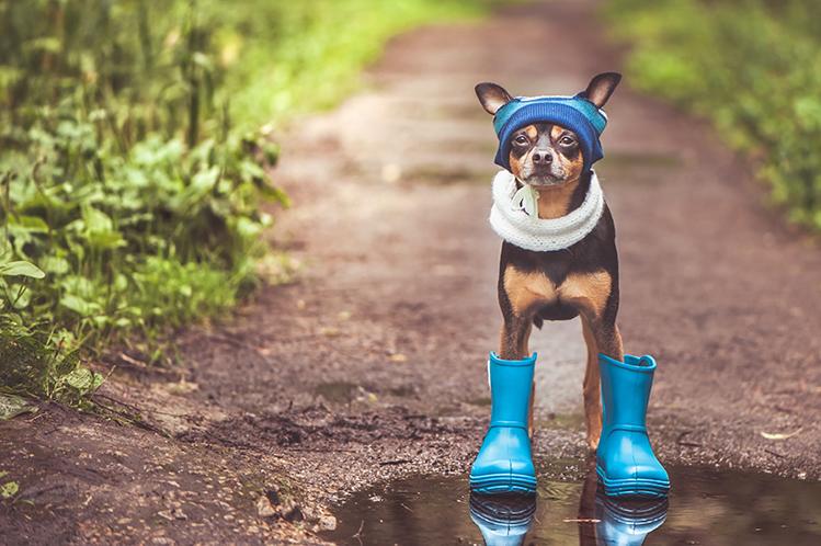 Как понять, что собака застудилась?