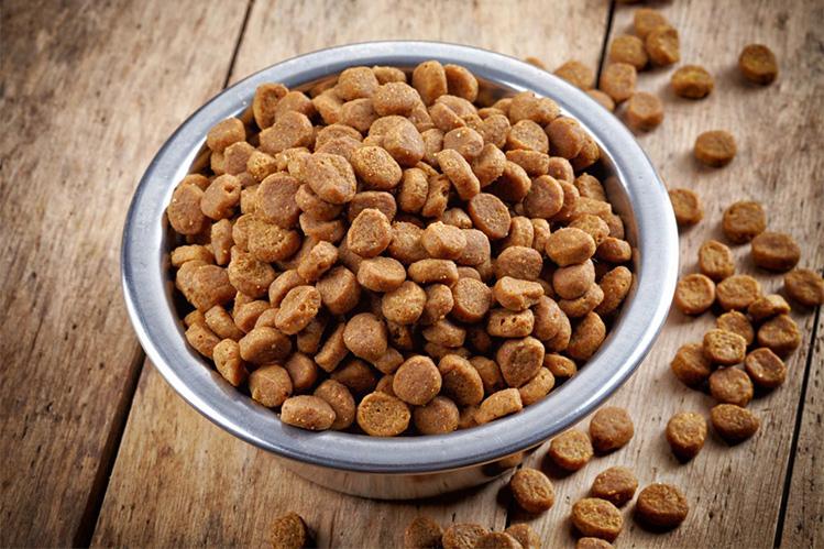 Кормление собак: Сухой корм - особенности, где купить.