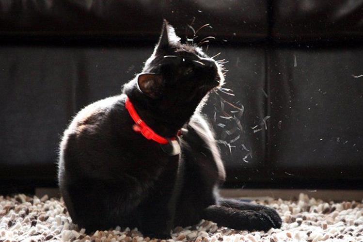 Как бороться с линькой у кошек
