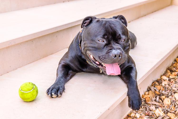 Как уберечь собаку от теплового удара?