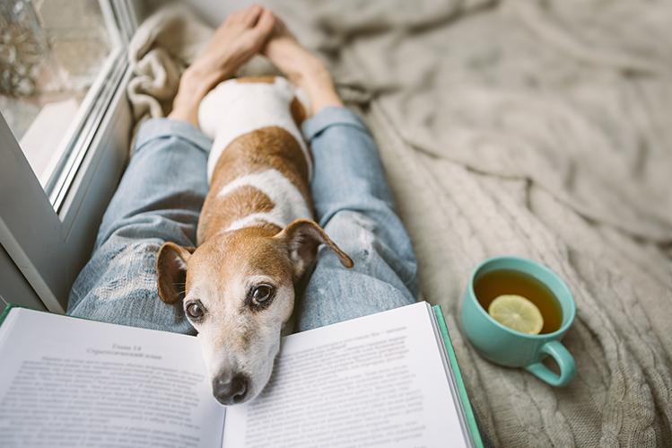 О чем говорят бледные десны у собаки?