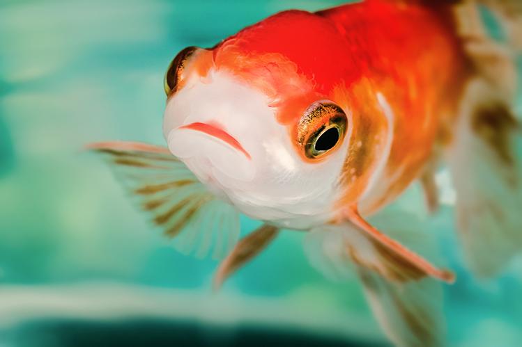 Запуск рыбок в аквариум