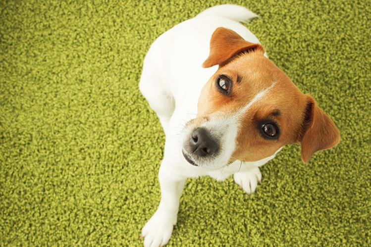 Покраснение глаз у собак