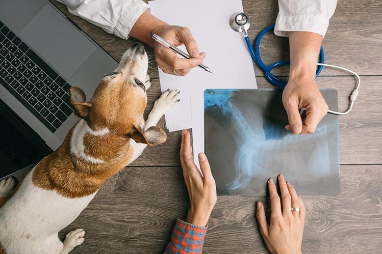 Зачем идти к ветеринарному врачу-неврологу?