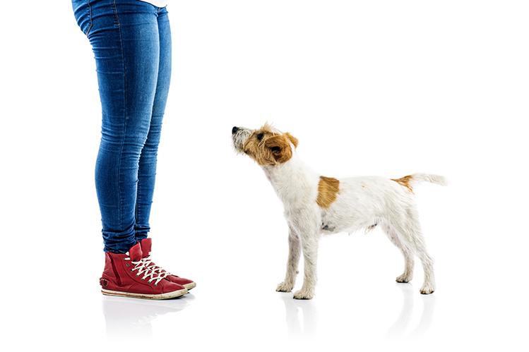 Ошибки при воспитании собаки