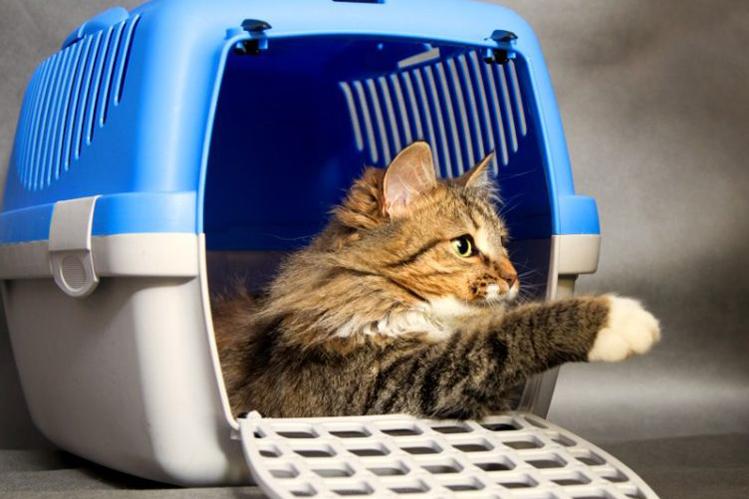 Перевозка кошки в поезде
