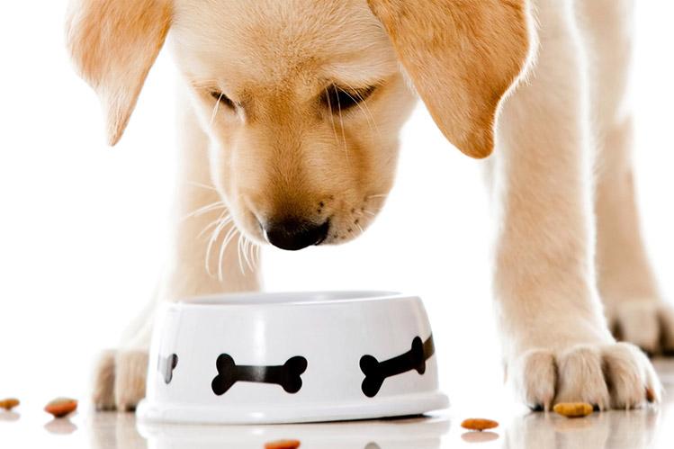 Кормление щенка сухим кормом