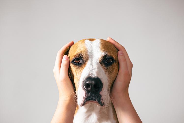 Собака укусила хозяина: что делать?