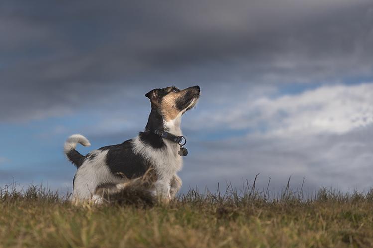 Что делать, если собака боится грозы?