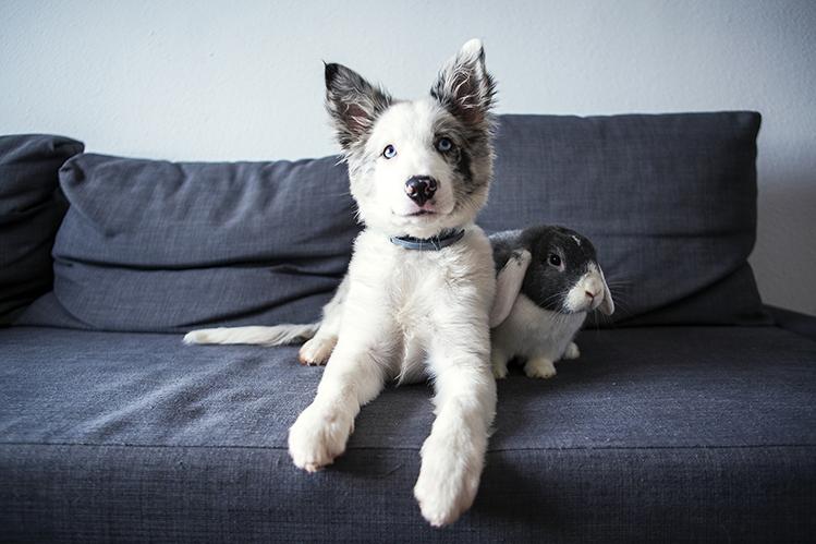 Могут ли собаки дружить с грызунами и кроликами?