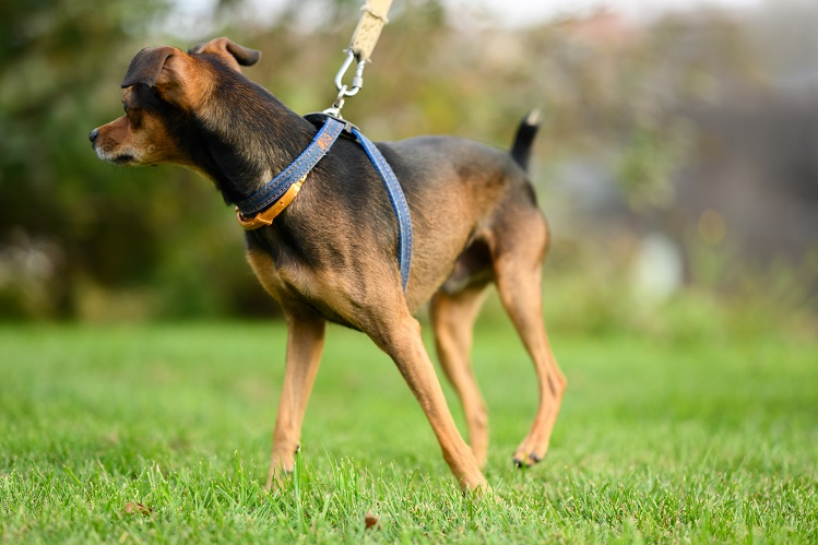 Как вырастить смелую собаку?