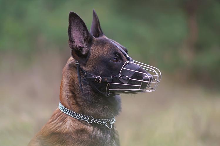 Как приучить собаку к наморднику?
