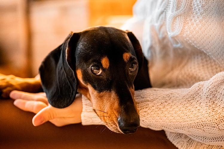Как ухаживать за собакой из приюта?