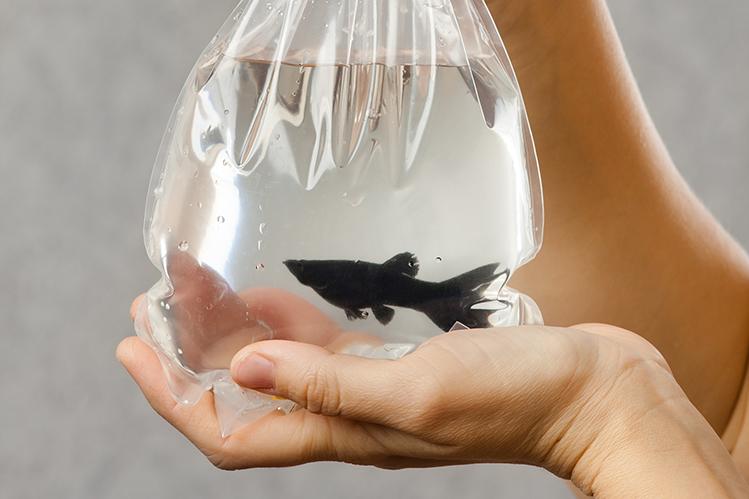 Как запускать рыбок в аквариум?