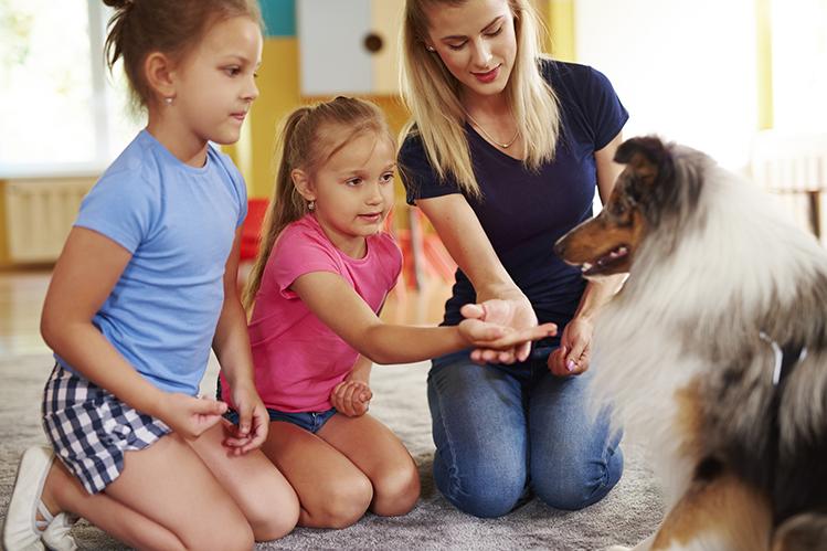 Как отучить собаку бояться гостей и людей на улице?