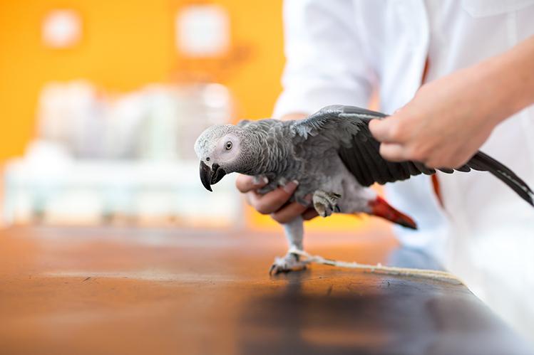 Как выбрать ветеринарную клинику и ветврача?