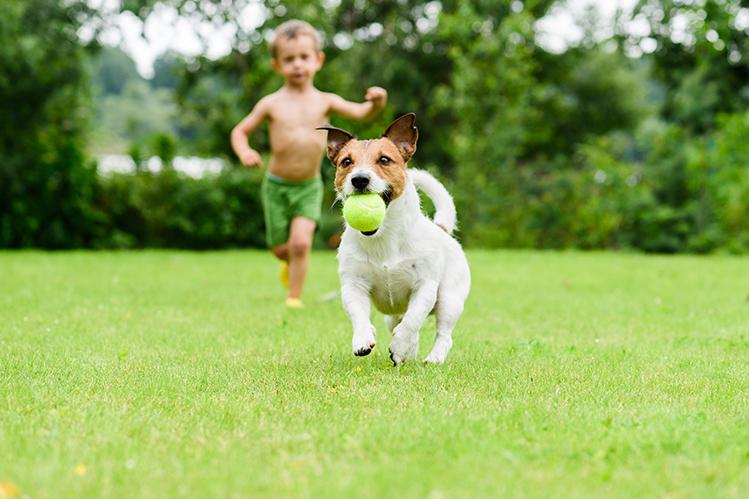 Можно ли ребенку завести собаку?