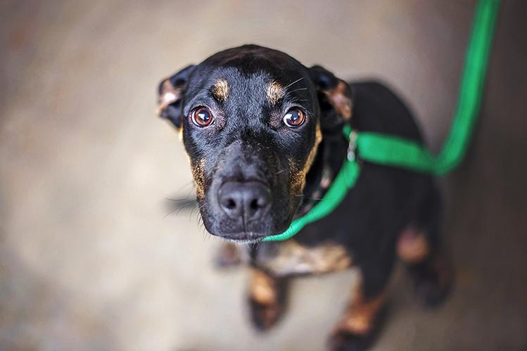 Собака боится других собак: что делать?