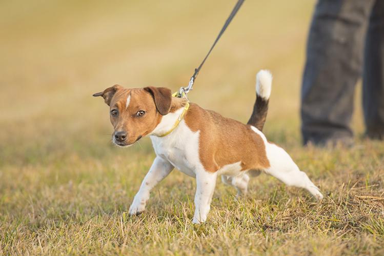 Как научить собаку стойке?