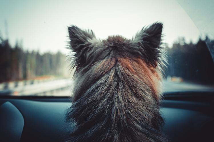 Как обучить собаку поведению в общественном транспорте?