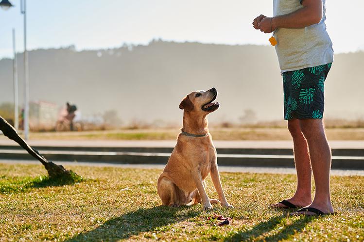 Как подружить собаку с кликером?