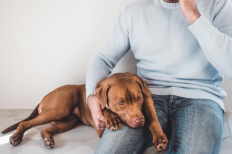Как помочь собаке при отравлении?