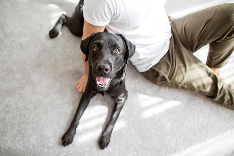 Как понять свою собаку?