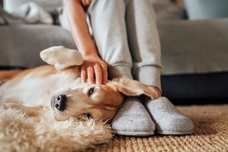 Адаптация собаки из приюта: с какими сложностями можно столкнуться?