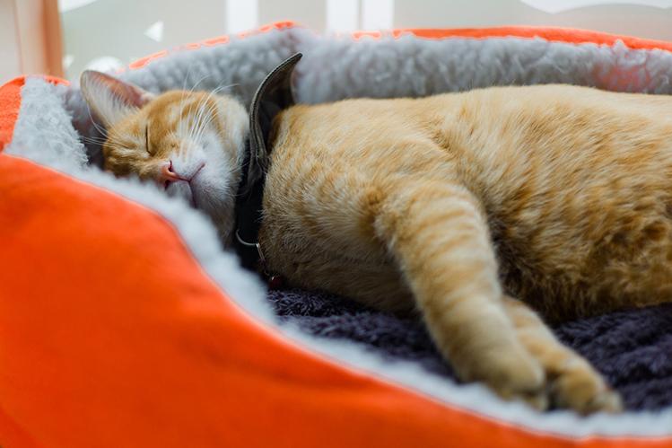 Приколы, картинки кошки спят в кроватках
