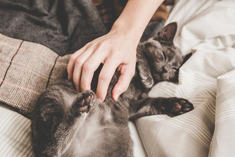 Почему кошки мурлычат?