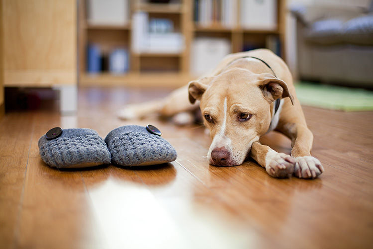 Один дома: как одиночество сказывается на собаке?