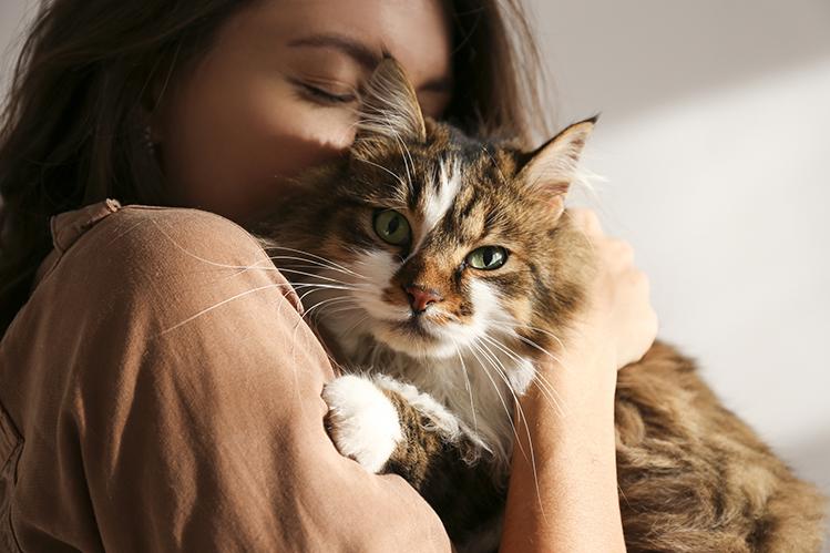 Почему кошки мурчат?
