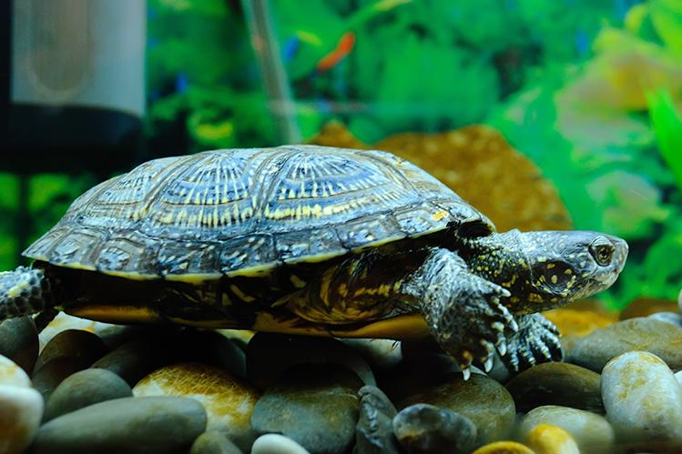 водные черепахи рекомендации по содержанию фото новогодних плакатов новый