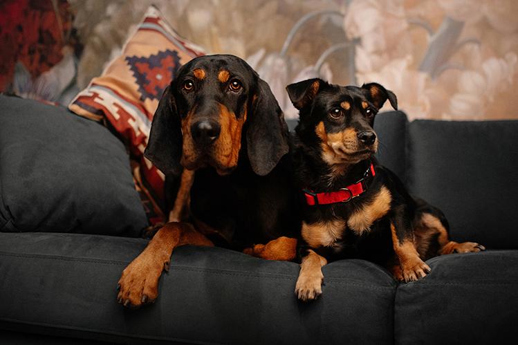 Как подружить щенка со взрослой собакой?