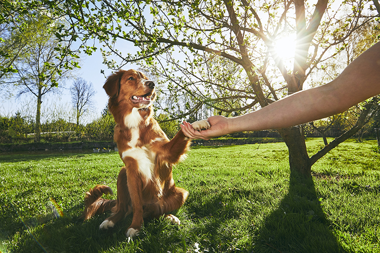 Агрессия у собак: почему проявляется и что с ней делать?