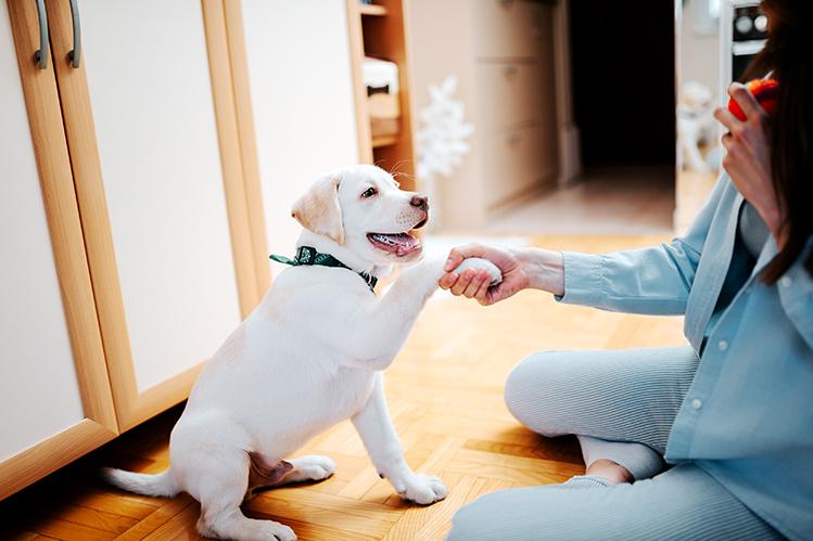 С чего начать воспитание щенка?