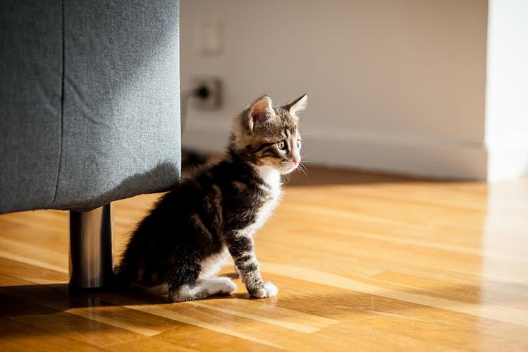 Стресс у котенка