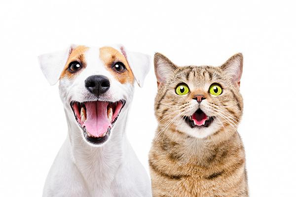 Можно ли заводить собаку или кошку, если есть аллергия?
