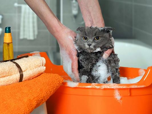 Как мыть кошек?