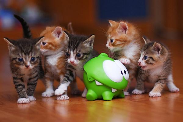 Топ-10 лучших игрушек для кошек