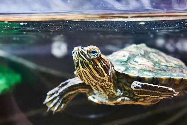 водные черепахи рекомендации по содержанию фото рецепты приготовления блюд