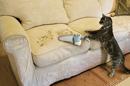 обязательно ли мыть кошек