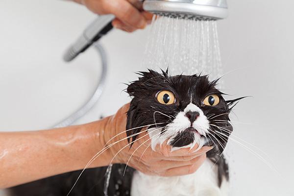 Почему кошки и коты боятся воды?