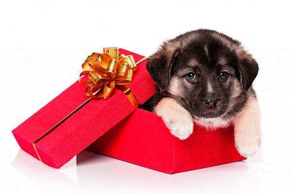 Чего подарить своему щенку