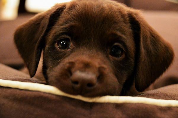 Как отучить щенка скулить по ночам?