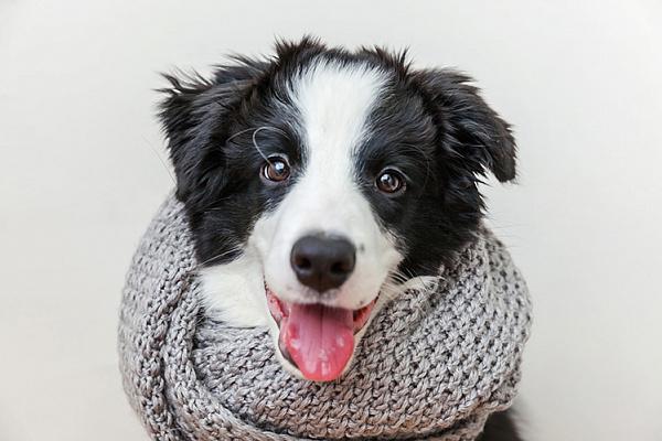 Почему зимой у собаки выпадает шерсть, и что с этим делать
