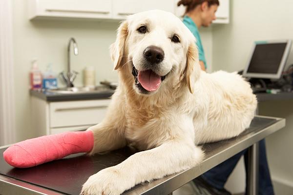 лекарство для похудения собак