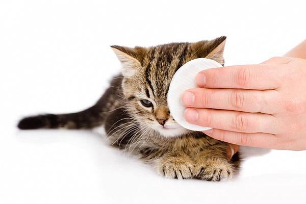 Как и чем промыть глаза кошке?
