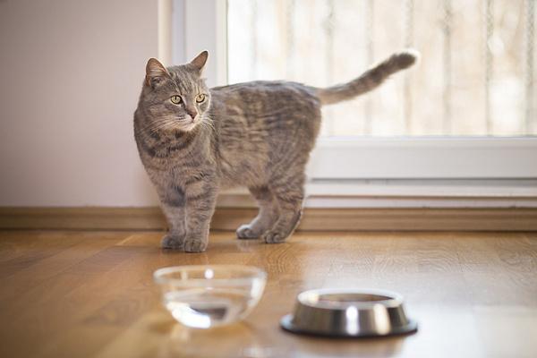 Кошка не пьет из миски!