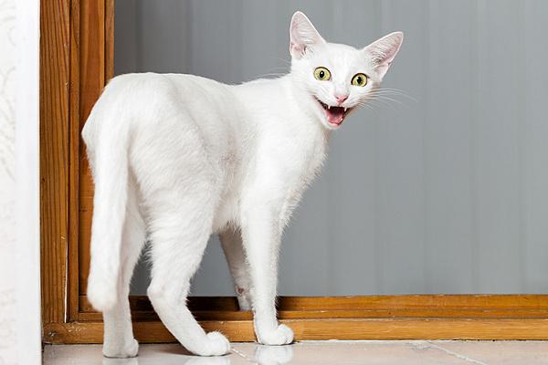 Почему кот орет без причины по ночам